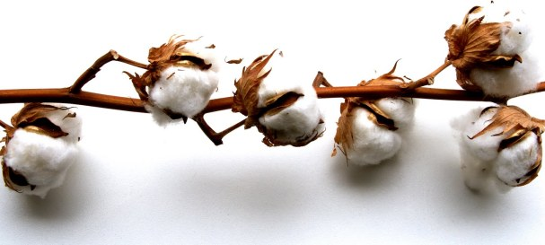Challenges of the global Cotton Industry